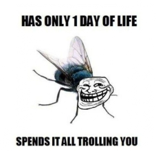 Has-Only-1-Day-Of-Life-Spends-It-All-Trolling-You-Funny-Fly-Meme